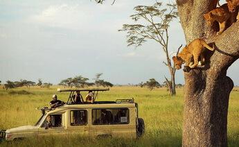 Kenya Safari Turu 2