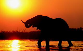Kenya Safari Turu 3