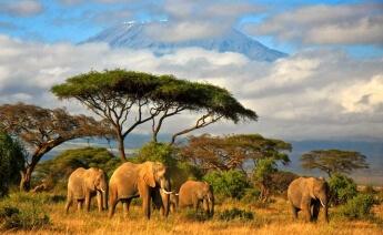 Kurban Bayramı Tanzanya Zanzibar Turu
