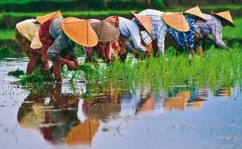 Vietnam Kamboçya Turu 5