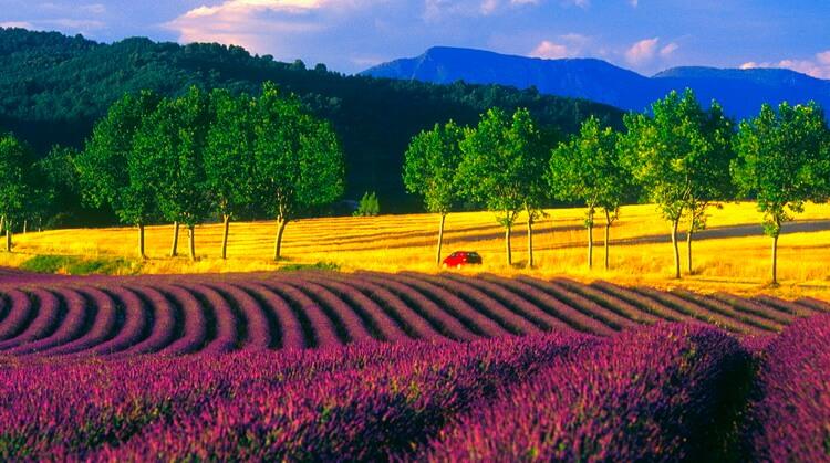 Provence Turu