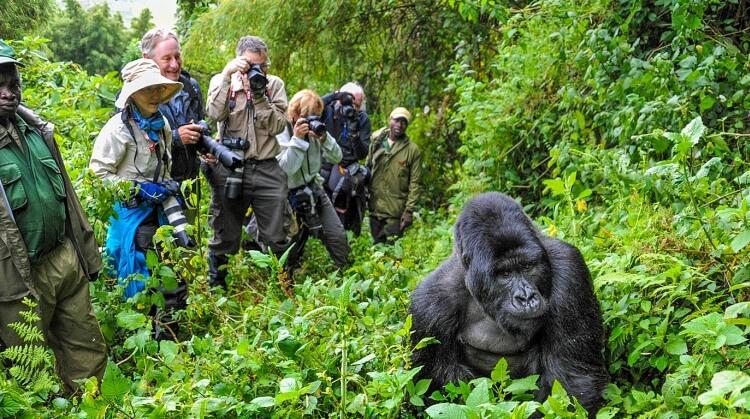 Kenya Uganda Goril Safarisi Turu