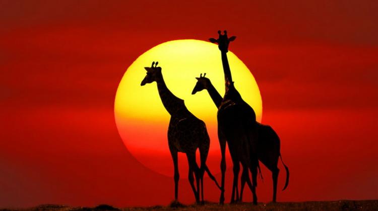 Ramazan Bayramı Güney Afrika Turu 2