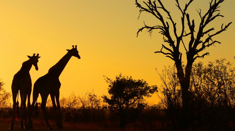 Güney Afrika Turu 4