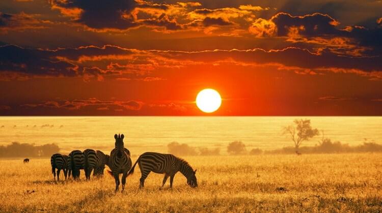 Fırsat Güney Afrika Turu