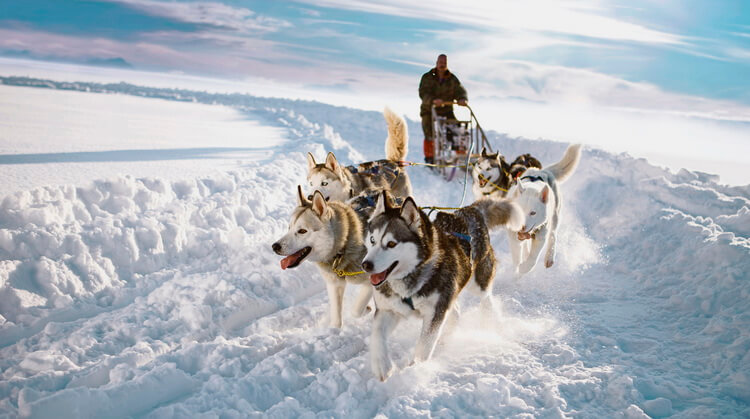 Sömestr Lapland Kuzey Işıkları Turu (Direkt Uçuşlu)