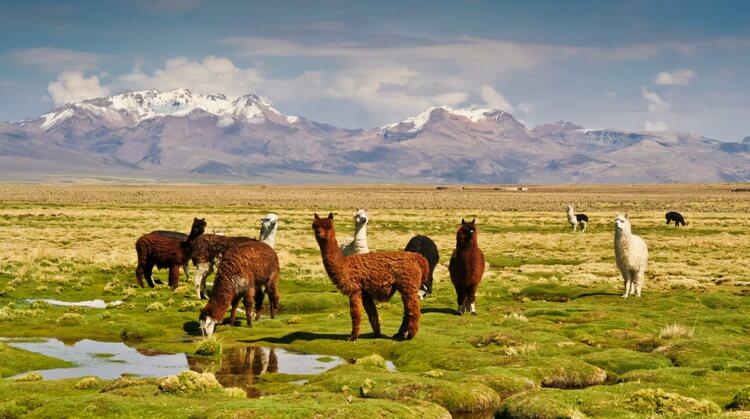 Peru Bolivya Şili Turu