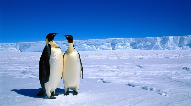 Antarktika Turu