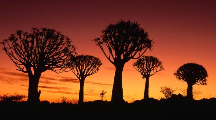 Namibya Turu