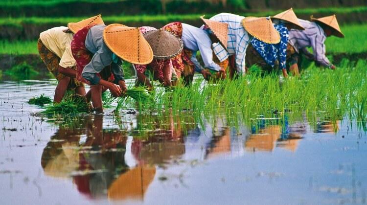 Vietnam Turu