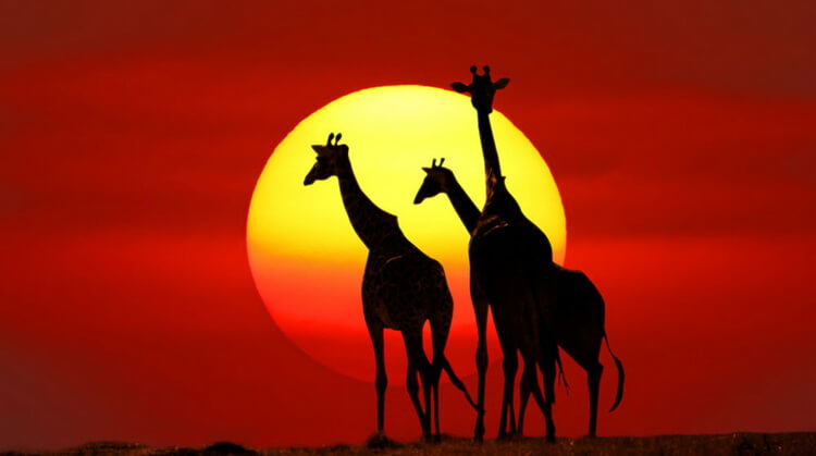 Fırsat Kurban Bayramı Güney Afrika Turu