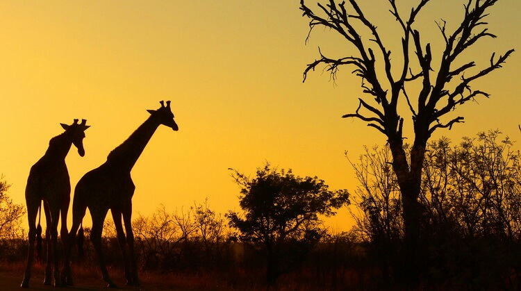 Güney Afrika Turu