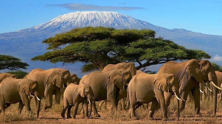 Kurban Bayramı Serengeti Safari Zanzibar Turu