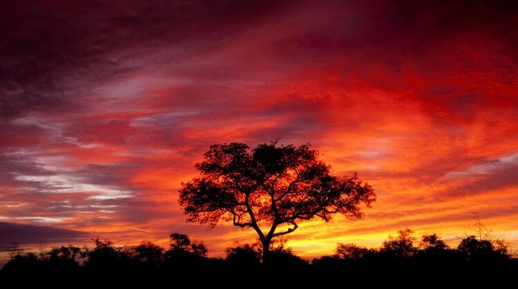 Güney Afrika ve Kruger Safari Turu