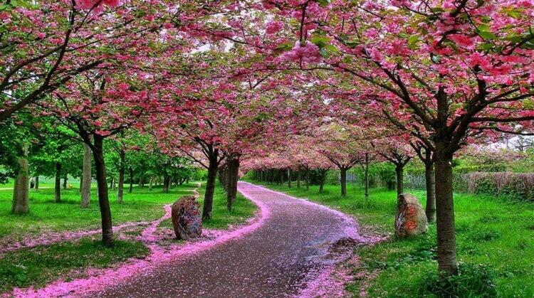 Kurban Bayramı Japonya Kore Turu