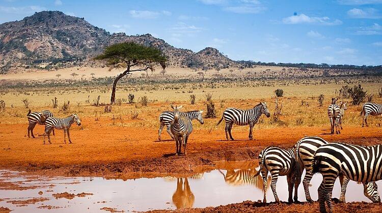 Sömestr Kenya Safari Turu