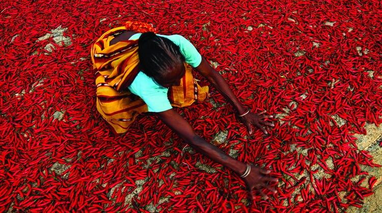 Hindistan Sri Lanka Turu