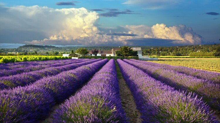Ramazan Bayramı Provence Turu