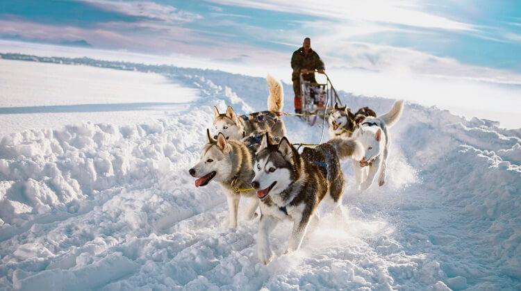 Yılbaşı Lapland Kuzey Işıkları Turu 2