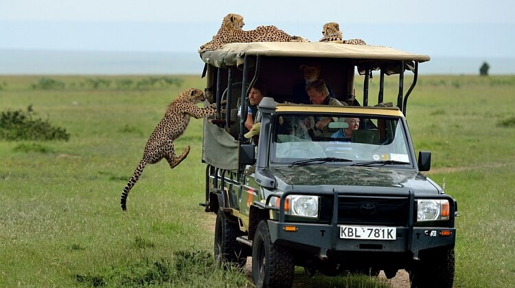 Serengeti Safari ve Zanzibar Turu
